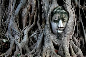 Earth Talk:What is the Place of Spirituality in Ecology?