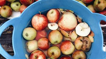 Crafted: Apple Day! one-day course