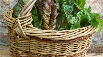 Crafted: Weave Your Own Foraging Basket - one place left!