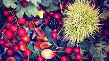 Crafted: Wild Autumn Super Foods, one-day course