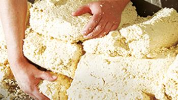 Craft of Halloumi Cheese Making