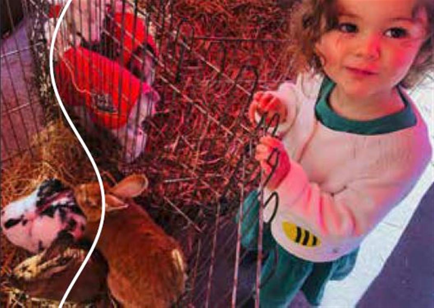 EASTER PETTING FARM AND EGG HUNT