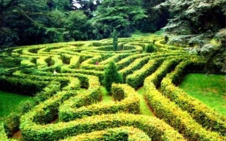 Maze Trails