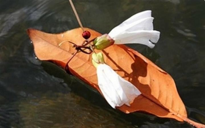Nature Boats
