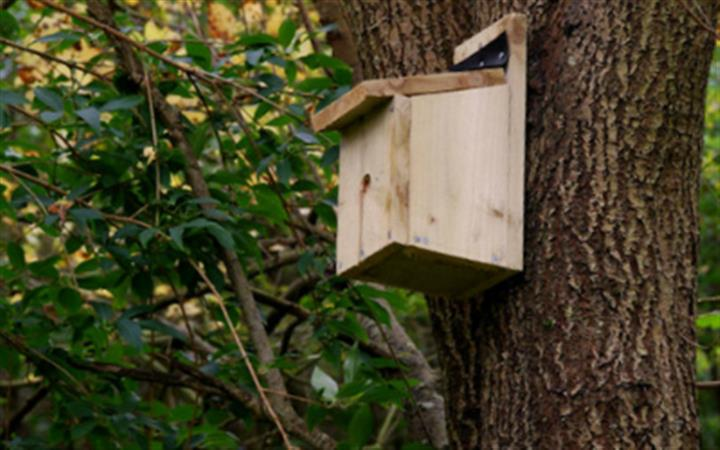 National Bird Box Week image