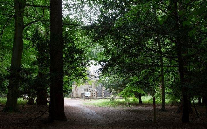 Brandon Country Park's 'Park in the Dark' Prize Trail image