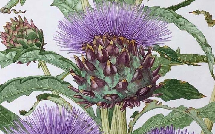 Iceni Botanical Artists Exhibition image