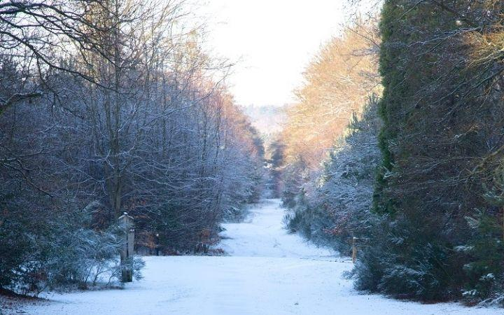 Brandon Country Park's 'Wintering Wildlife' Prize Trail image