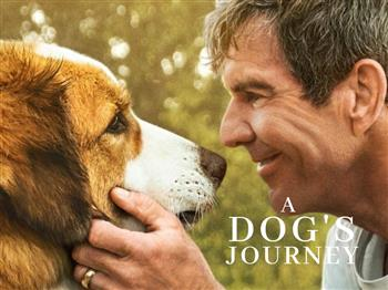 Featured image for SMP: A Dog's Journey (PG)