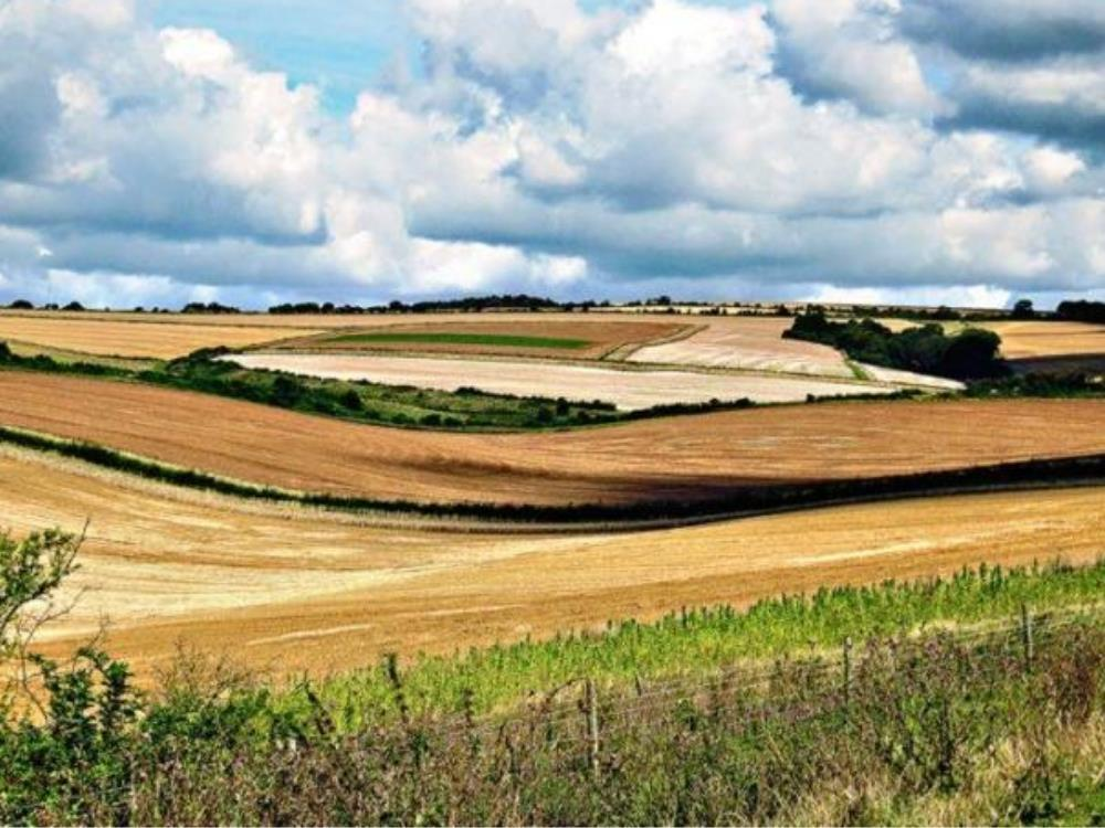 Main image for Thursday Archaeology Walks: The Burpham Downland