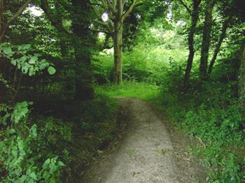Featured image for Thursday Archaeology Walks: Clapham Woods
