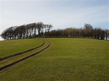 Featured image for Saturday Archaeology Walks: Chanctonbury Ring